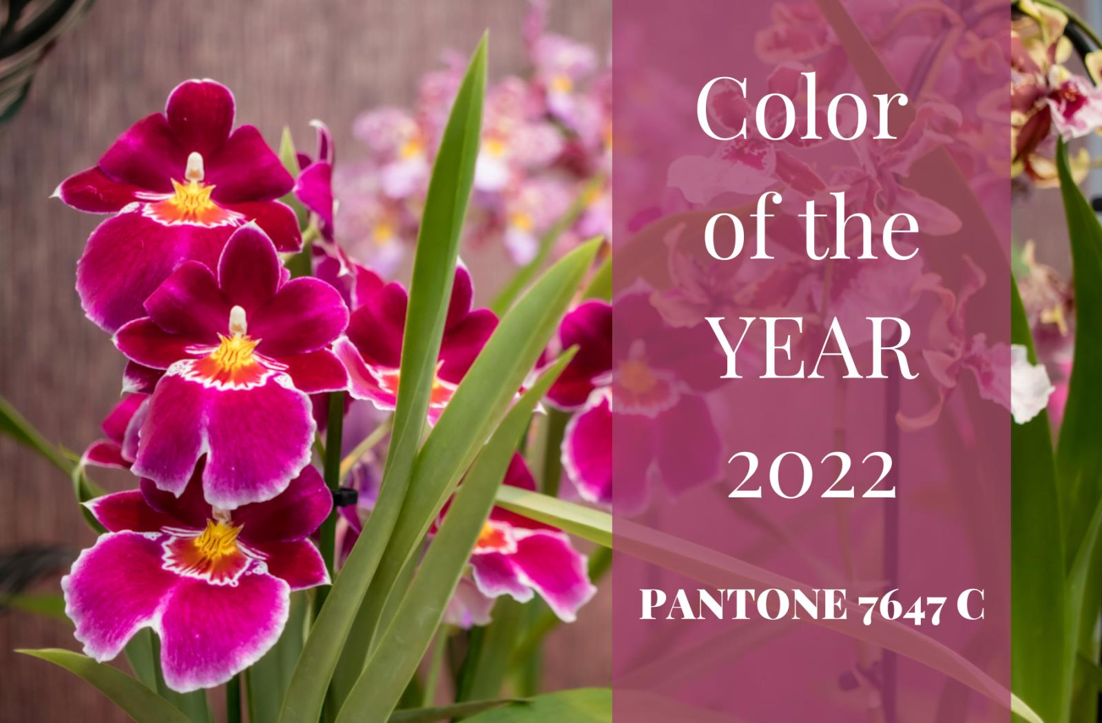 De trendkleur volgens SION orchids