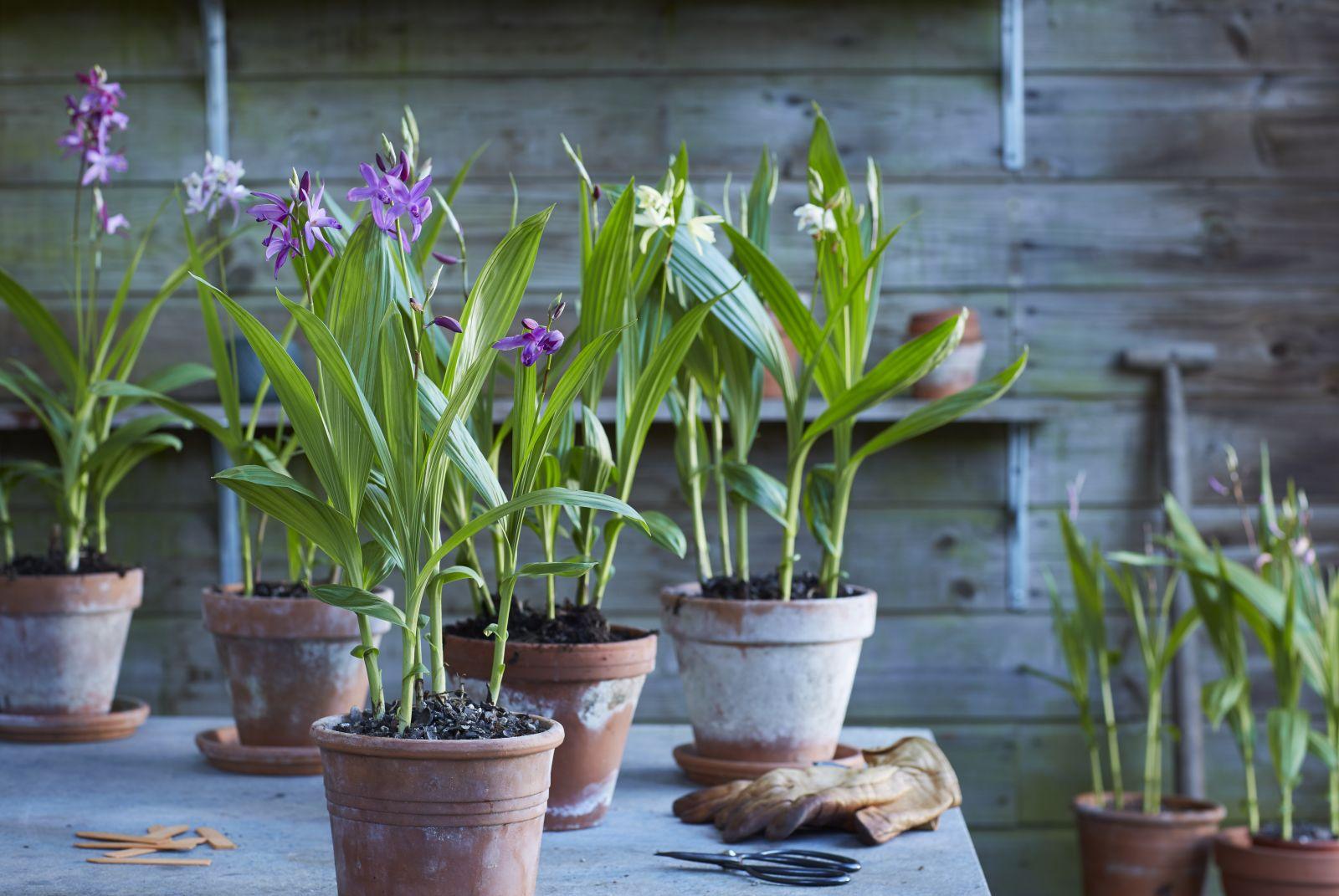 De verzorging van je orchidee tijdens een hittegolf
