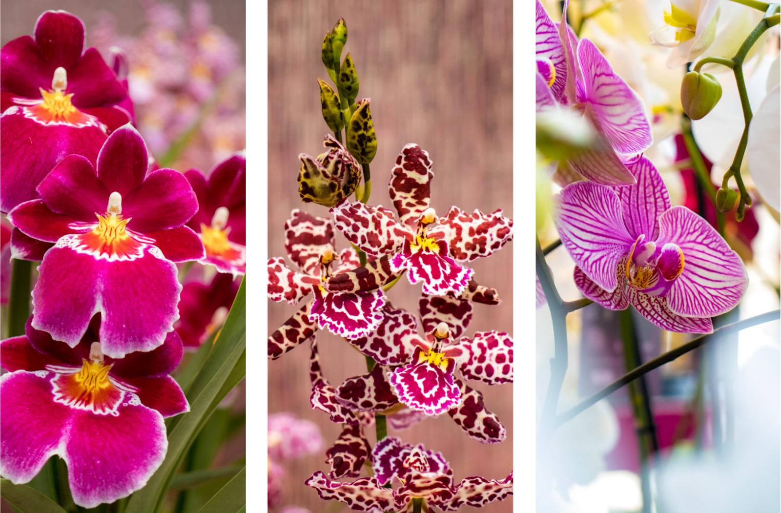 orchidee in prachtige kleuren