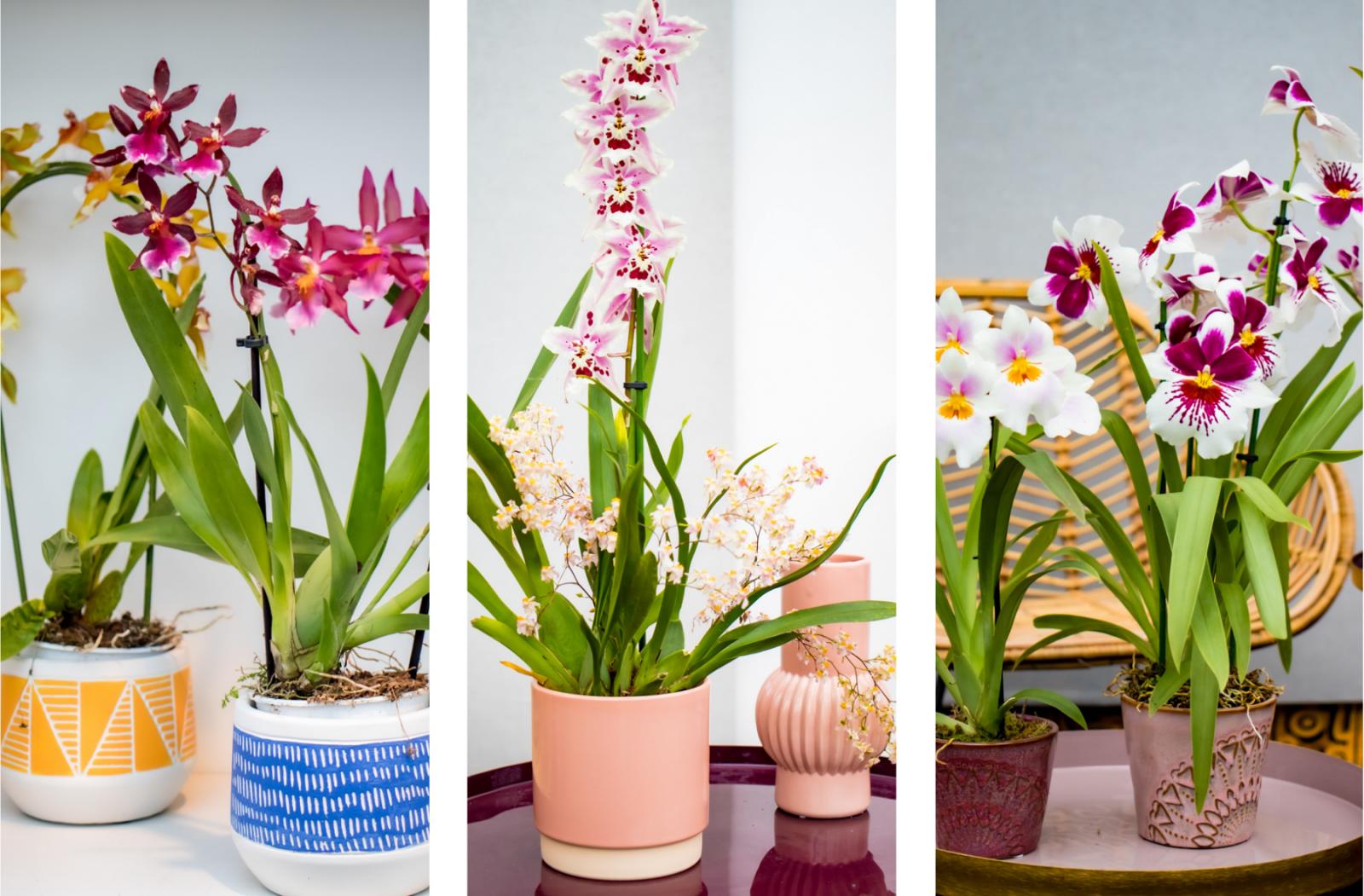 een mooie sierpot voor je orchidee