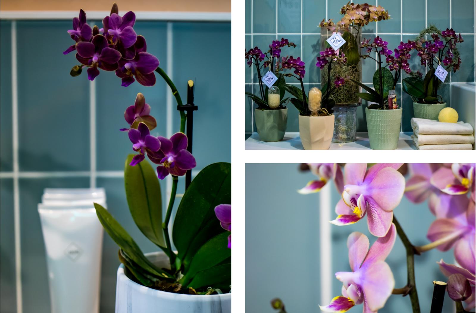 orchidee in de badkamer