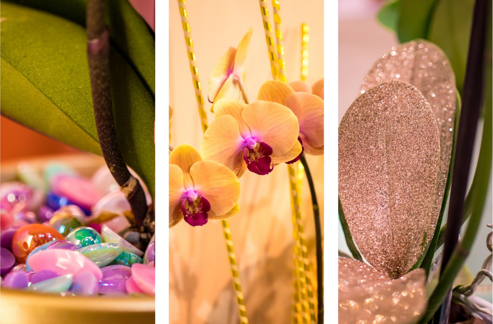 versier je orchidee