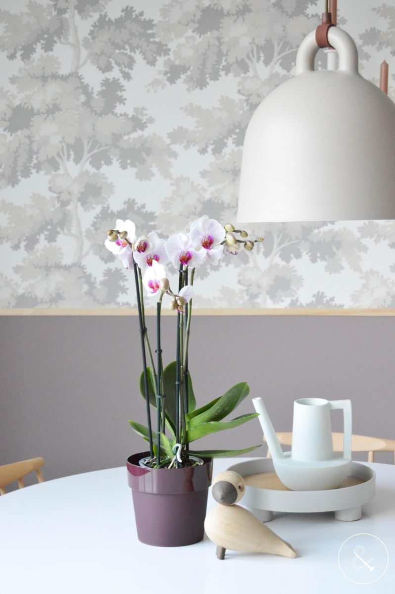 EASY CARE FOR A PHALAENOPSIS