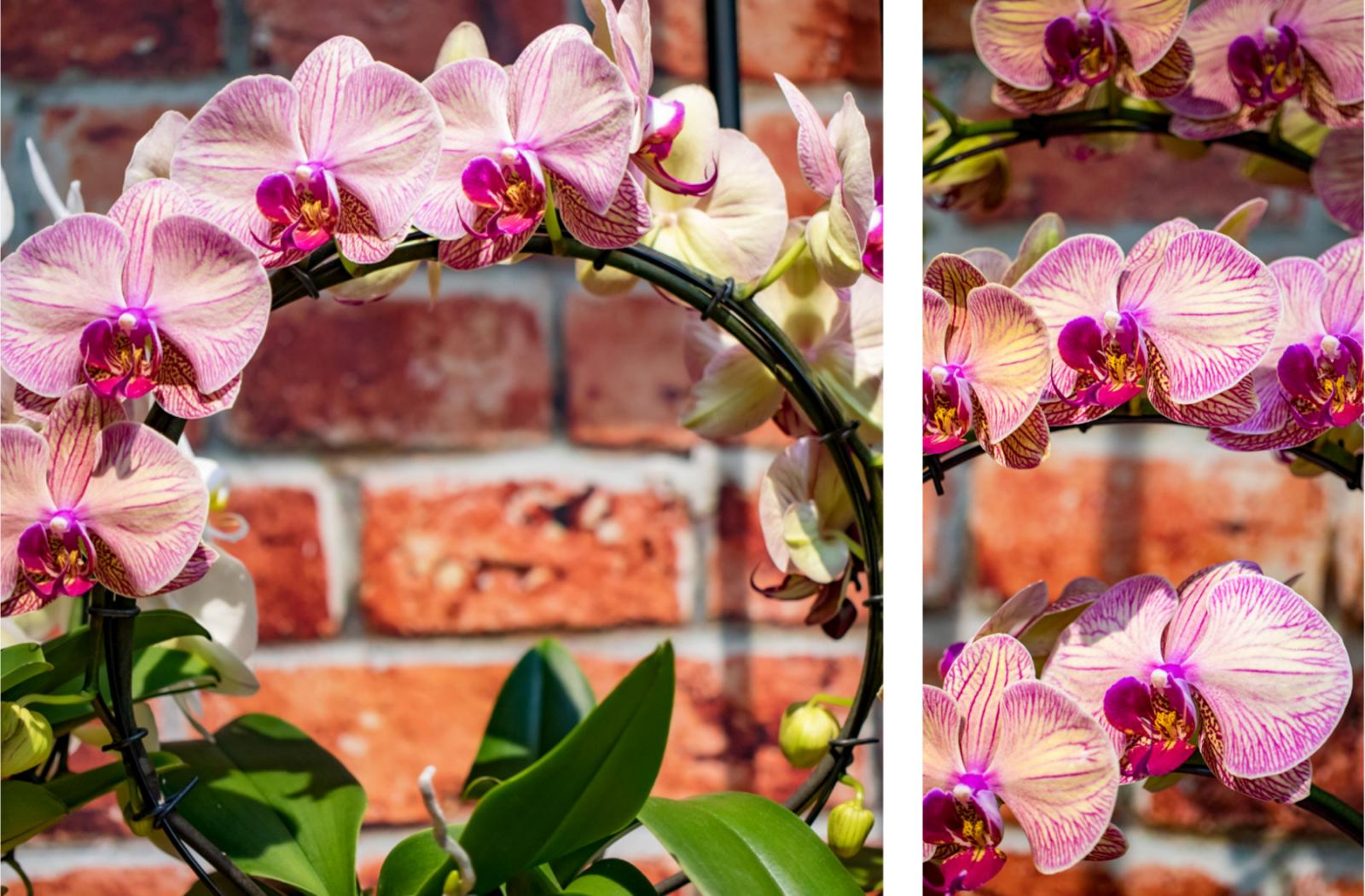 orchidee in een boog