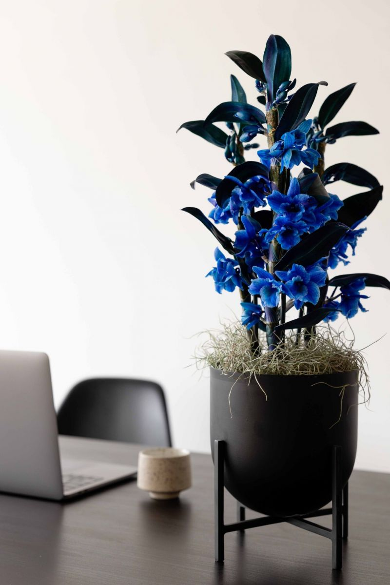 orchid on your desk