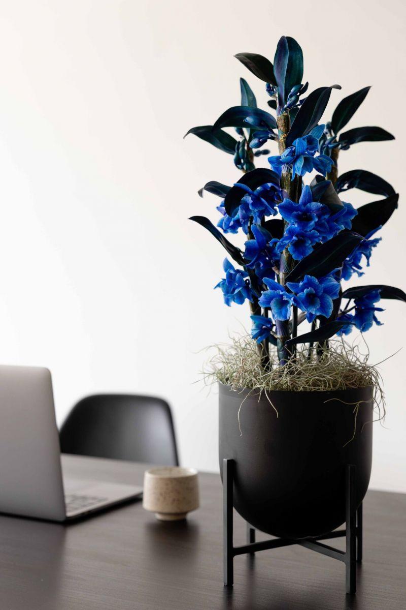 orchidee op bureau