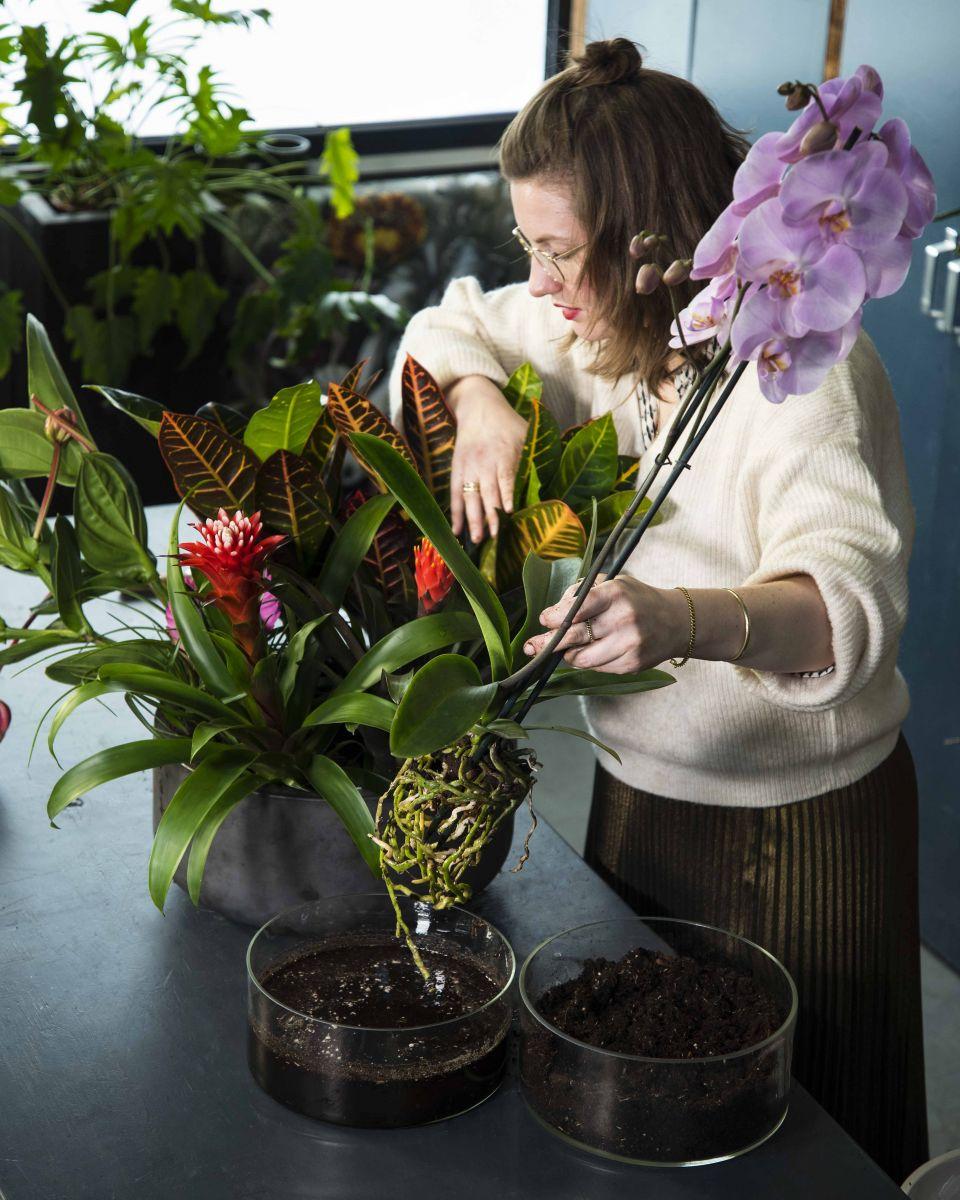 Bloemstuk gemaakt van orchideeën en planten