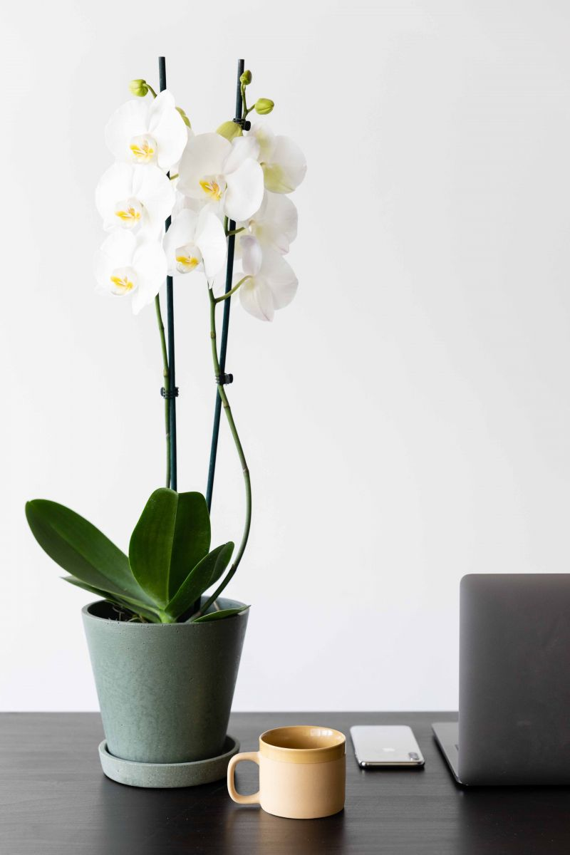 orchid in your home office