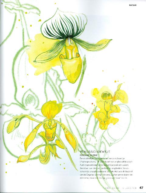 Ode aan de orchidee