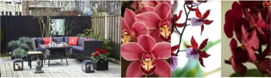 Orchidee trend: Asia Mania