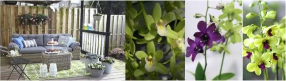 Orchidee trend: razend romantisch