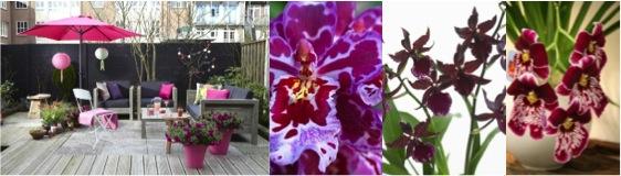Orchidee trend: Très Tropicana