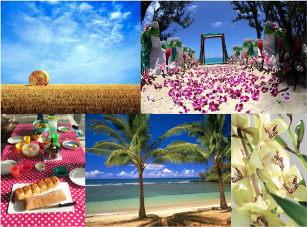Zomer moodboard tuintrends Orchidee
