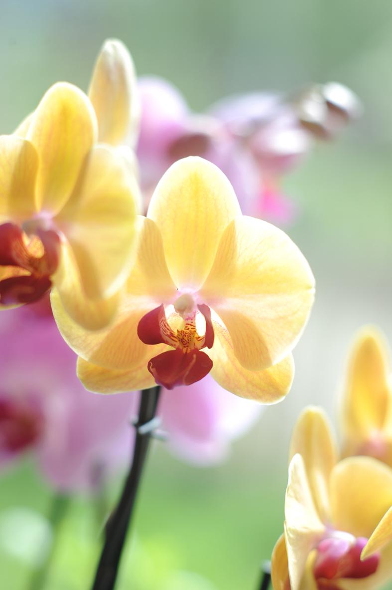 Help! Mijn orchidee heeft last van bladluis of wolluis
