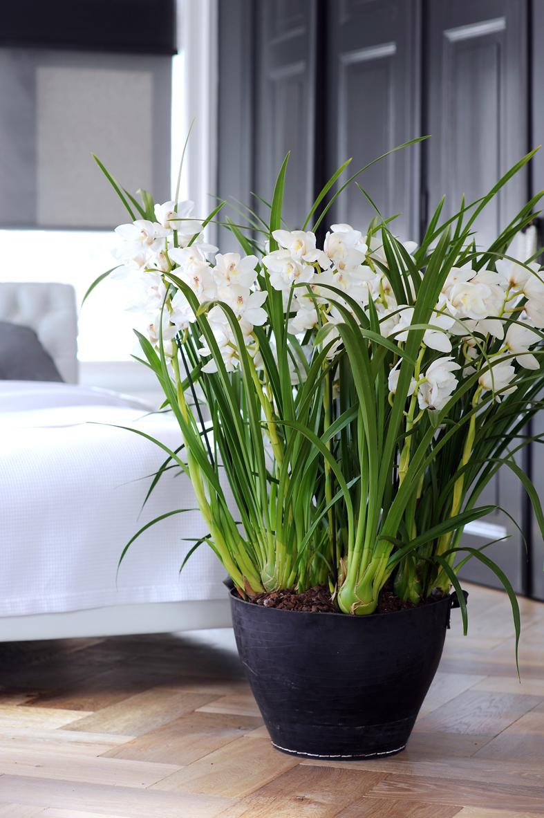 Help! Ik heb uitlopers aan mijn orchidee