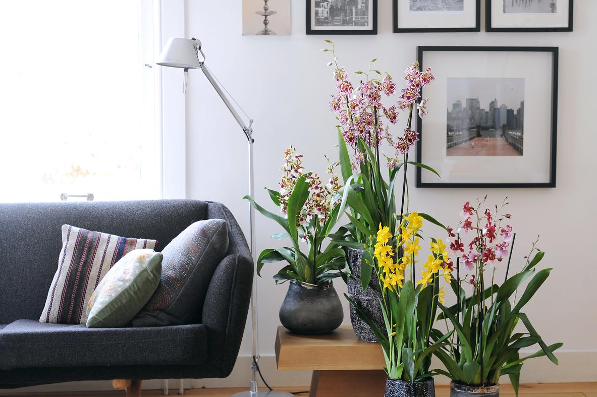 verzorgingstips van de orchideeënkweker