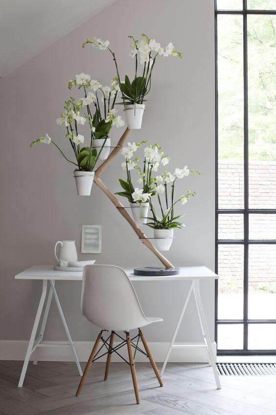 Orchid Twister van Francois Hannes